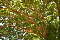 Schattenbaum Lizenzfreies Stockbild