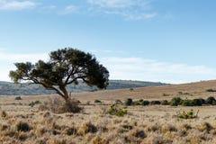 Schattenbaum auf dem links Stockbilder