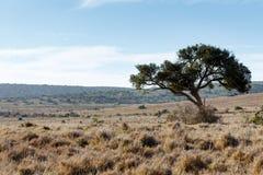 Schattenbaum auf dem Recht Stockfotos