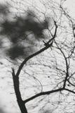 Schattenbaum auf der Wand Lizenzfreie Stockfotos