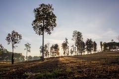 Schattenbaum auf gesetztem Hintergrund Sun Lizenzfreie Stockfotos