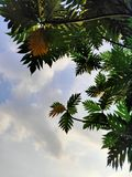 Schattenbaum lizenzfreies stockfoto
