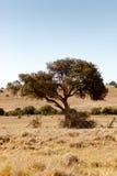 Schattenbaum, der nach links zieht Lizenzfreies Stockfoto
