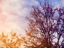 Schattenbaum im Abendbewölkten himmel Stockbild