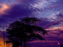 Schattenbaum im Abendbewölkten himmel Stockbilder