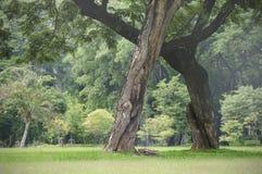 Schattenbaum im Park Lizenzfreie Stockfotos