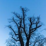 Schattenbaum vor blauem Himmel Stockbilder