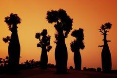 Schattenbild australische Baobabbäume Lizenzfreies Stockfoto
