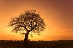 Schattenbild-Baum Stockfoto