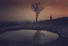 Schattenbild - Baum und seine Reflexion Lizenzfreie Stockbilder