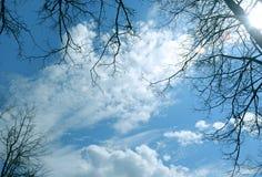 Schattenbild der Bäume Lizenzfreie Stockfotos