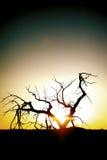 Schattenbild der Bäume auf Sonnenuntergang stockbild