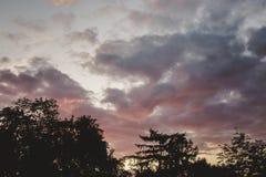 Schattenbild der Bäume gegen einen Sonnenuntergang Lizenzfreies Stockbild