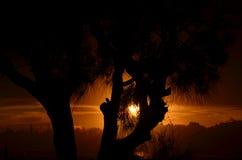Schattenbild der Baumform Stockfoto