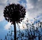 Schattenbild der Blume stockbild