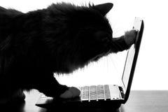 Schattenbild der Katze im Internet schauend Video auf einer Laptop-Computer Lizenzfreie Stockbilder