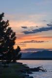 Schattenbild der Kiefers in der Küste des Sees von Sevan herein Lizenzfreie Stockfotos
