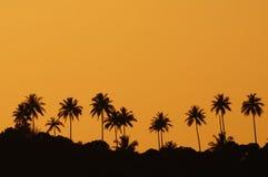 Schattenbild der Kokosnussbäume Stockbild