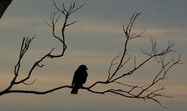 Schattenbild der Niederlassung und des Vogels Stockfotos