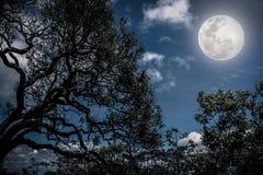 Schattenbild der Niederlassungen der Bäume gegen den nächtlichen Himmel mit f Stockfotos