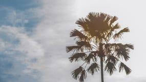 Schattenbild der Palme Lizenzfreie Stockbilder