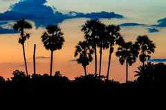 Schattenbild der Palme auf Dämmerung Lizenzfreie Stockfotografie