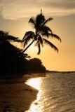 Schattenbild der Palme auf dem Strand am Sonnenuntergang Lizenzfreies Stockfoto