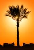 Schattenbild der Palme gegen Sonne Lizenzfreie Stockfotografie