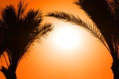 Schattenbild der Palme gegen Sonne Lizenzfreies Stockfoto