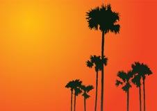 Schattenbild der Palmen Lizenzfreies Stockbild