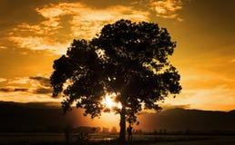 Schattenbild der schönen Kunst des einzelnen Baums Lizenzfreies Stockbild