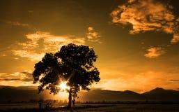 Schattenbild der schönen Kunst des einzelnen Baums Stockbild