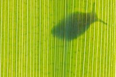 Schattenbild der Schnecke Stockfotos