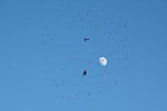 Schattenbild der Spinne voll sitzend im Netz von Fliegen auf blauem Himmel mit Mond Stockfotos