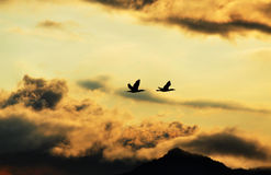 Schattenbild der Vögel, die nach Hause in dunkle Sturmwolken fliegen Lizenzfreies Stockbild
