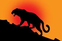 Schattenbild der wilden Katze auf Rot Stockfoto