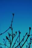 Schattenbild der Zweige Stockfoto
