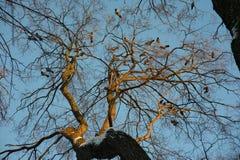 Schattenbild des allgemeinen Raben sitzend auf einem Baum lizenzfreie stockfotografie