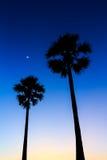 Schattenbild des Arengapalmebaums auf Sonnenunterganghimmel Stockfotografie