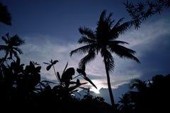 Schattenbild des asiatischen exotischen Dschungels, der Palmen und der anderer Stockfoto