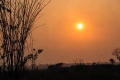 Schattenbild des Bambusses mit Sonne bei Sonnenuntergang lizenzfreies stockfoto