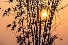 Schattenbild des Bambusses mit Sonne bei Sonnenuntergang lizenzfreie stockfotos