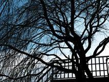 Schattenbild des Baums Lizenzfreies Stockbild