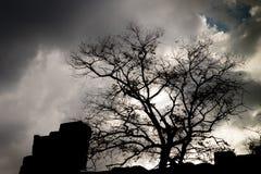 Schattenbild des Baums Lizenzfreies Stockfoto