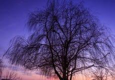 Schattenbild des Baums Stockfotografie