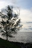 Schattenbild des Baums Lizenzfreie Stockbilder