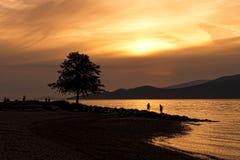 Schattenbild des Baums auf Strand am Sonnenuntergang Lizenzfreie Stockbilder