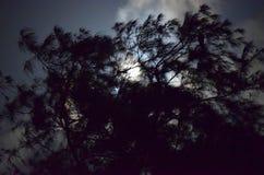 Schattenbild des Baums gegen Mondschein - natürlicher Nachthintergrund Lizenzfreie Stockfotografie