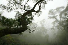 Schattenbild des Baums im Waldnebel Lizenzfreie Stockbilder