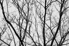 Schattenbild des Baums Schwarzweiss Stockfotografie